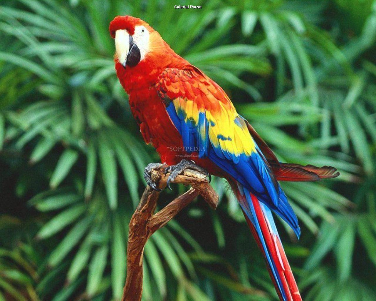 Birds are so fashionable - Fashionsizzle