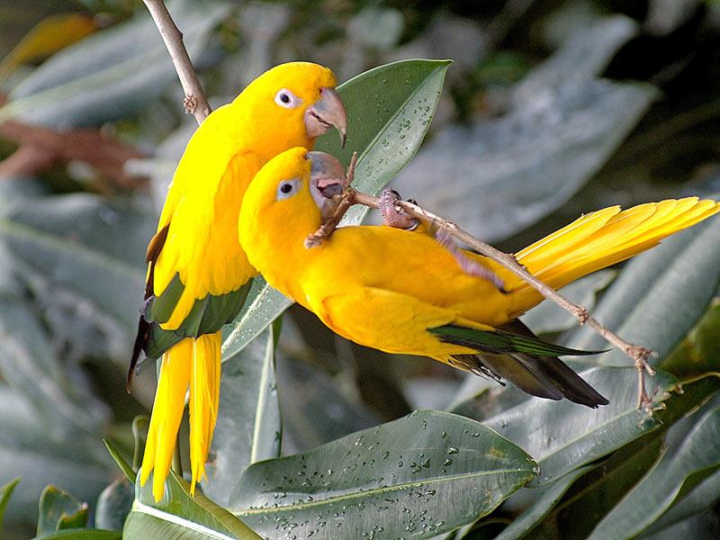 beautiful-birds-6