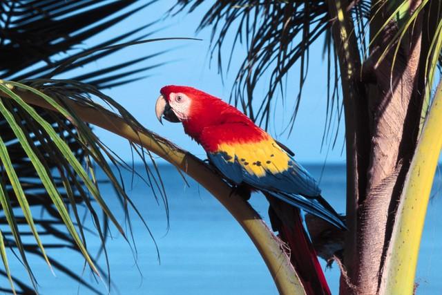 Exotic-Birds-05