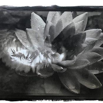 artist-photographer-debbie-eschoe-2