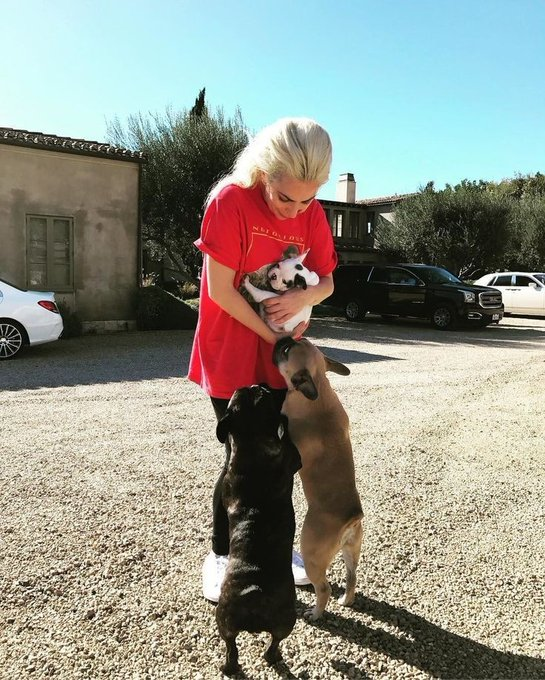lady-gagas-dogs-recovered-unharmed-at-l-a-police-station