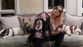 lady-gaga-pleads-for-an-act-of-kindness-and-the-safe-return-of-her-dogs