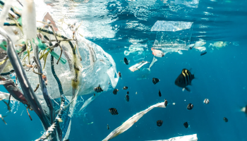 why-we-need-to-switch-to-sustainable-and-plastic-free-products
